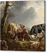 Two Bulls Defend Against A Cow Attacked By Wolves Canvas Print