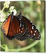 Two Butterflies Canvas Print