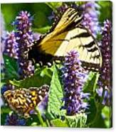 Two Butterflies In The Afternoon Sun Canvas Print