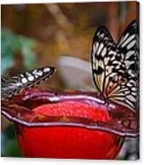 Two Butterflys Canvas Print