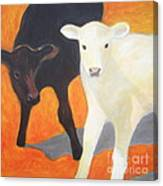 Two Calves Canvas Print