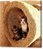 Two Cats In A Condo Canvas Print
