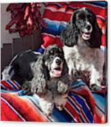 Two Cocker Spaniels Together Canvas Print