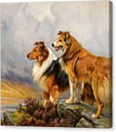 Two Collies Above A Lake Canvas Print