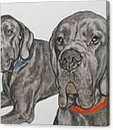 Two Cool Danes Canvas Print