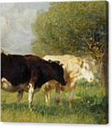 Two Cows In A Meadow Canvas Print