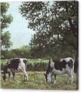 Two Cows In Field At Throop Dorset Uk Canvas Print