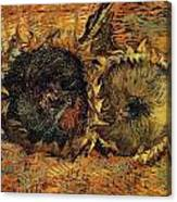 Two Cutted Sunflowers Canvas Print