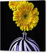 Two Daises In Striped Vase Canvas Print