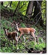 Two Deer Canvas Print