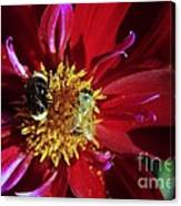 Two Different Bees Sharing  Canvas Print
