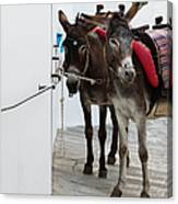 Two Donkeys Tethered In The Street In Canvas Print