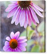 Two Echinacea Canvas Print
