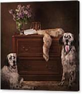 Two English Setters... Canvas Print