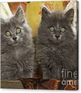 Two Fluffy Kittens Canvas Print