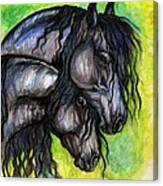 Two Fresian Horses Canvas Print