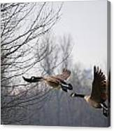 Two Geese In Flight Canvas Print