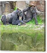 Two Gorillas Relaxing II Canvas Print
