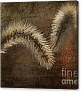 Two Grass Flowers Canvas Print