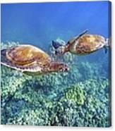 Two Green Turtles Canvas Print