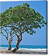 Two Heliotrope Trees On Tropical Beach Art Prints Canvas Print