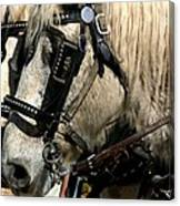 Two Horse Power Canvas Print