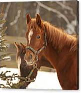 Two Horses In Winter Day Canvas Print