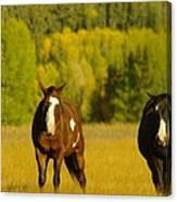 Two Horses Walking Along Canvas Print