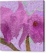 Two Hothouse Beauties Canvas Print