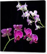 Two Kind Of Orchid Flower Canvas Print