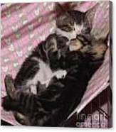 Two Kittens Sleeping Canvas Print