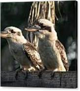 two Kookaburra Canvas Print