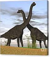 Two Large Brachiosaurus In Prehistoric Canvas Print