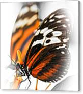 Two Large Tiger Butterflies Canvas Print