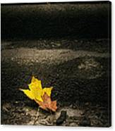 Two Leaves On A Staircase Canvas Print