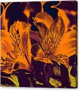 Two Lilies Gradient Ink Outline Canvas Print
