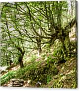 two little brothers Chasing Fairies in theBeech Forest on a summer day Canvas Print