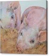 Two Little Piggies Canvas Print
