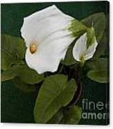 Two Lovely Lilies Canvas Print