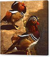 Two Mandarins Canvas Print