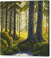 Two Old Spruce Canvas Print