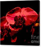 Two Orchids Canvas Print