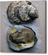 Two Oysters Canvas Print