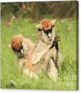 Two Patas Monkeys Erythrocebus Patas Grooming Canvas Print