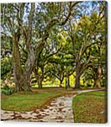 Two Paths Diverged In A Live Oak Wood...  Canvas Print