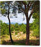 Two Pine Trees Canvas Print