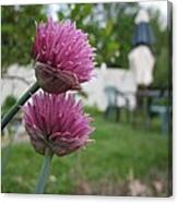 Two Pink Chives Canvas Print