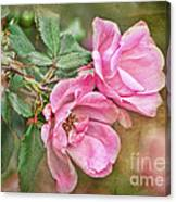 Two Pink Roses I  Blank Greeting Card Canvas Print