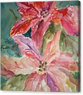 Two Poinsettias Canvas Print
