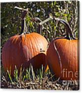 Two Pumpkins Canvas Print